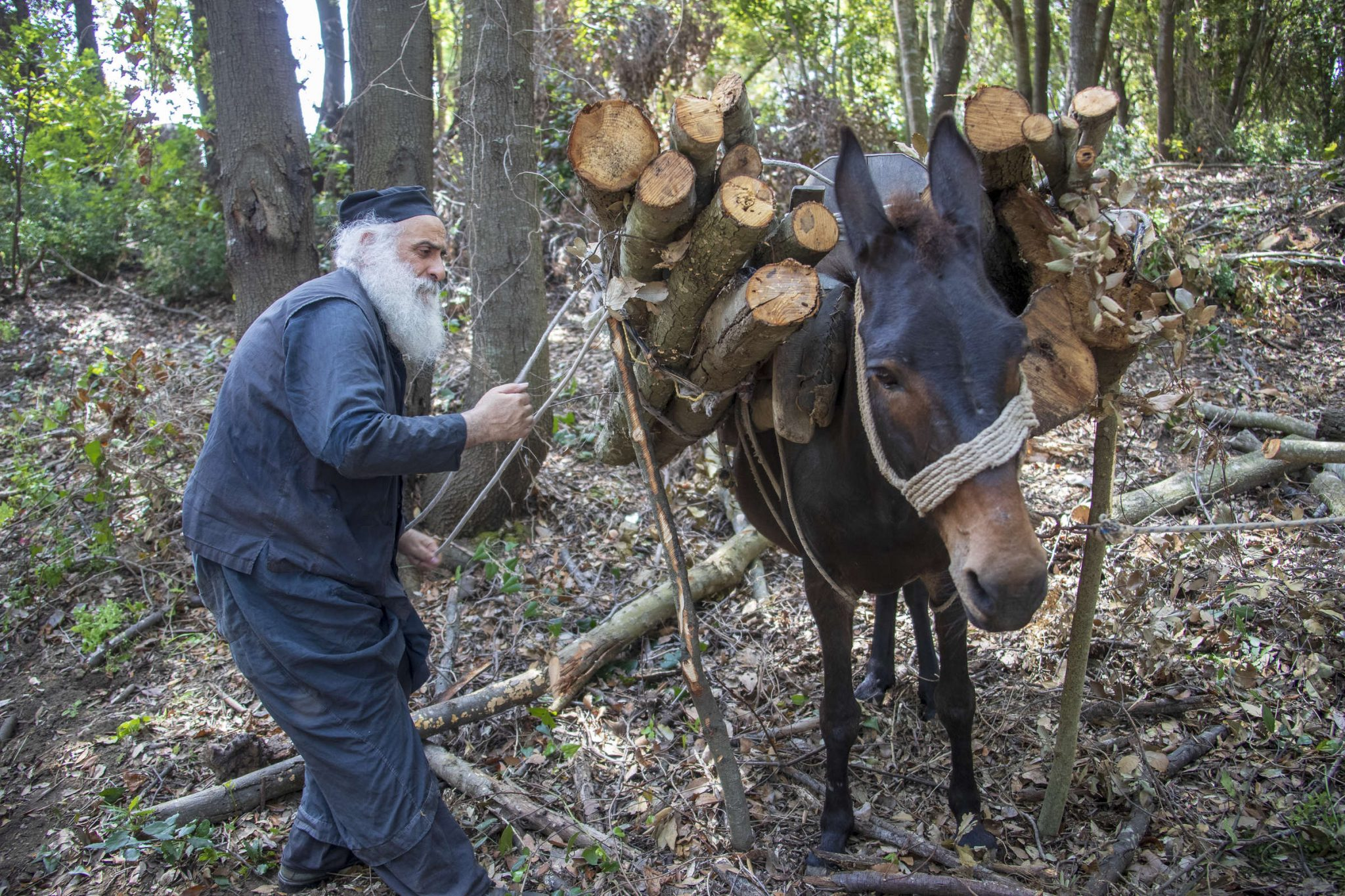 What can we learn from mules? - A photo journal with great schema monks and mules